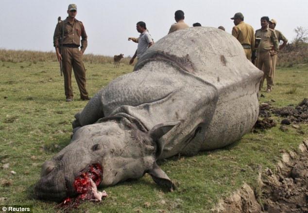 В 2014 году в Южной Африке было убито рекордное число носорогов