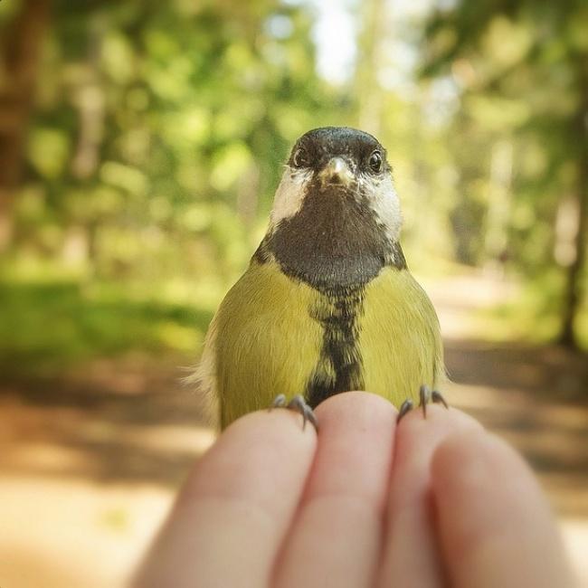 20снимков фотографа, скоторым дружат животные