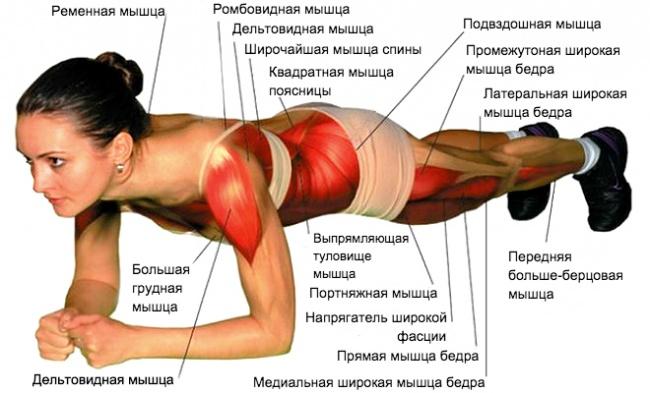 Лучшее упражнение навсе времена