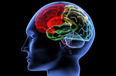 Мозг изменяется под влиянием формы жилого помещения - ученые