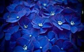 Ода синему цвету