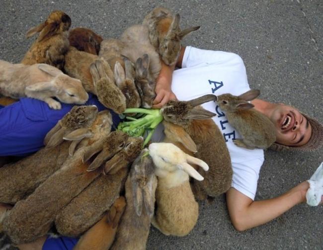 Вот так выглядит кроличий рай вЯпонии