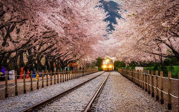 Весна прекрасна в разных уголках планеты!