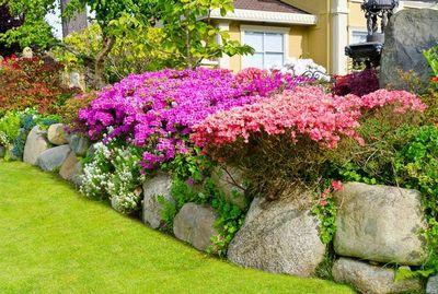 Как подобрать цветущий кустарник для дачи