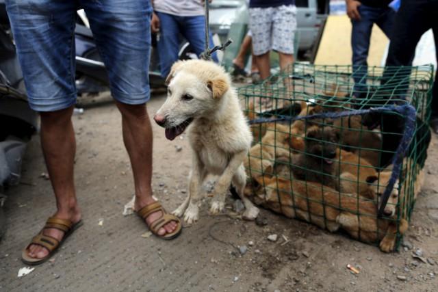 На фестивале собачьего мяса в Китае съели десять тысяч псов