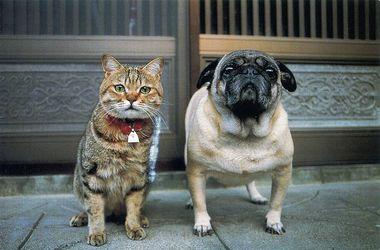 Биологи выяснили причину вражды между кошками и собаками