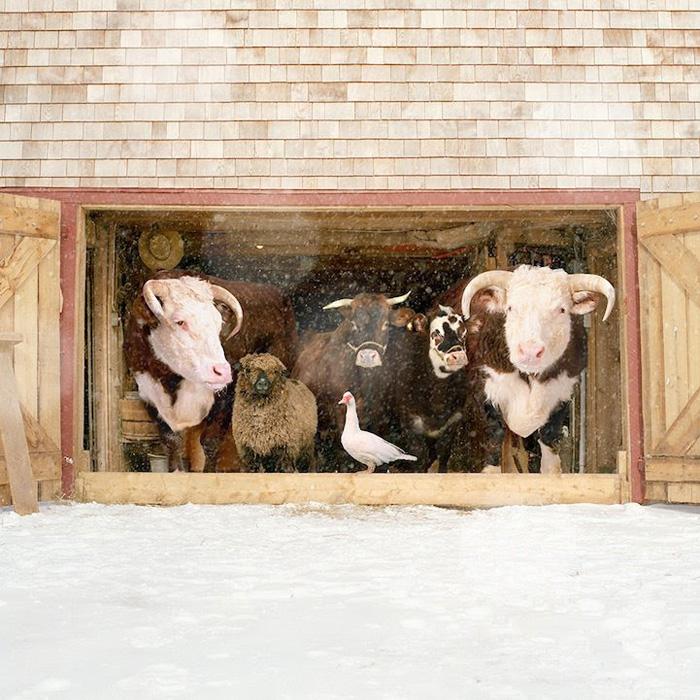 Фермерская семья. Зима.  Автор фото: Rob MacInnis.