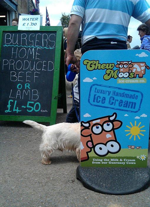 Собака возле рекламного щита.