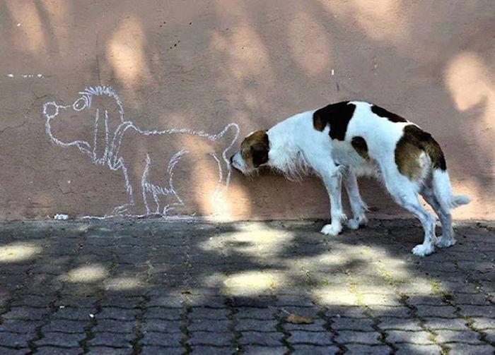Собака и его необычный друг.
