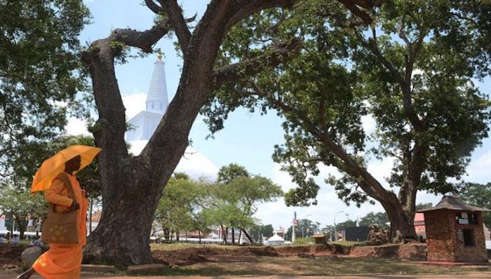 В деревне теперь есть много больших деревьев, которые дают спасительную тень.