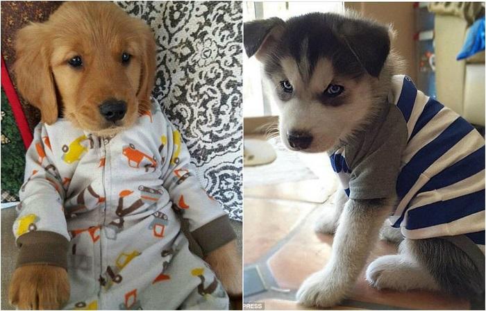 Стильные пижамы для питомцев от заботливых владельцев.