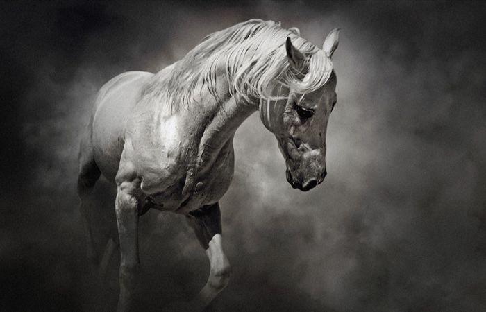 Грациозные лошади в работах Димитра Христова.