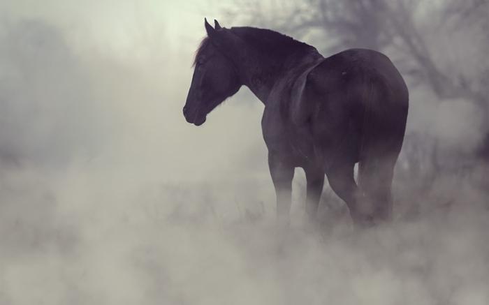Туман. Автор: Dimitar Hristov.