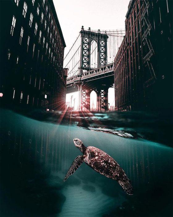 Привет, черепаха. Автор: Huseyin Sahin.