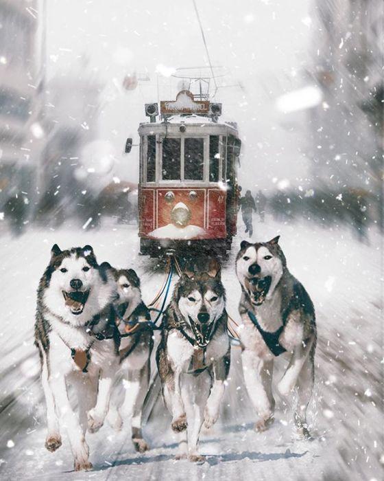 Волшебный поезд. Автор: Huseyin Sahin.