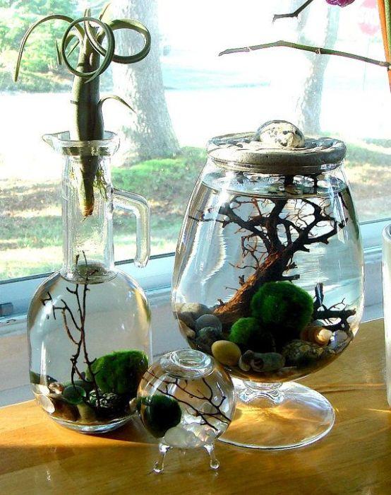 Зеленый шарик водоросли в японских семьях принято передавать по наследству, потому что приносит благополучие и удачу в дом.