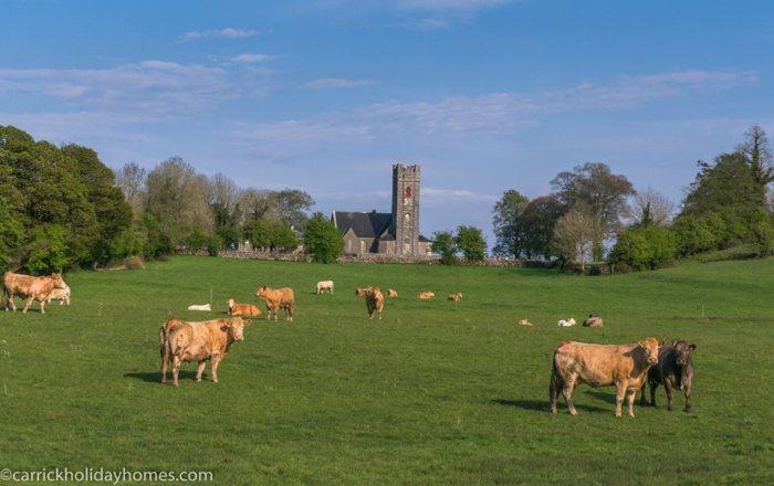Коровы пасутся у церкви, построенной в 1750 году. \ Фото: @gerryfaughnan