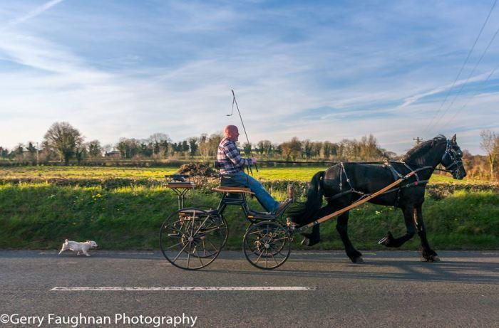 Мужчина, его лошади и его собака. Где-то в Мохилле. \ Фото: @gerryfaughnan